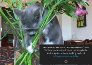 screenshot of feline usability tester